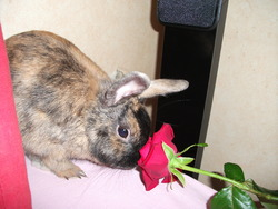 Coquin, rongeur Lapin