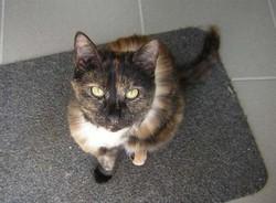 Zélie , chat
