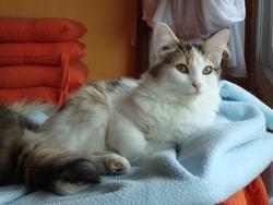Sushie, chat Gouttière