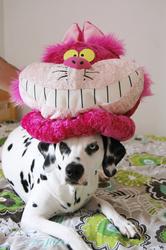 Capucine, chien Dalmatien