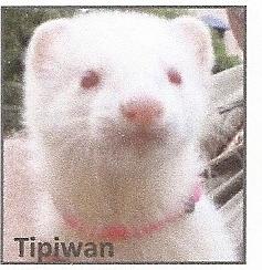 Tipiwan, autres