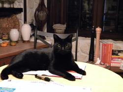 Kiki, chat Gouttière