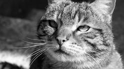 Câlin, chat Gouttière