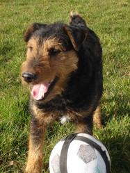 Tomy, chien Jagdterrier