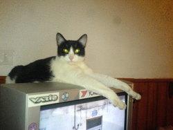 Meumeu, chat Gouttière
