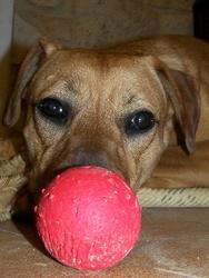 Beastie, chien