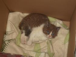 Gallia, chat Gouttière