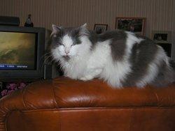 Ula, chat Gouttière