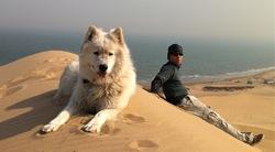 Neige, chien Samoyède