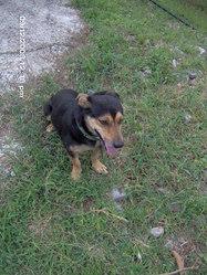 Theo, chien
