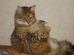 Bidule, chat Gouttière