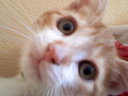 Eris, chat