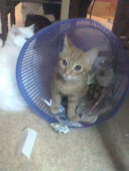 Trucmuche, chat