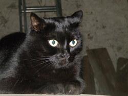 Pepite, chat Gouttière