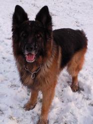 Vasco , chien