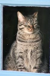 Bilbo, chat Gouttière