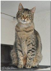 Cartouche, chat Gouttière