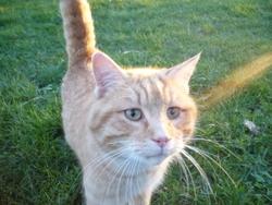 Prout, chat Gouttière