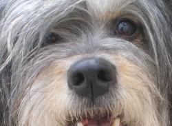 Mafalda, chien