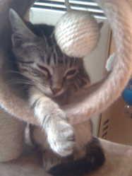 Kaya, chat Gouttière