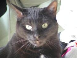 Vinci, chat Gouttière
