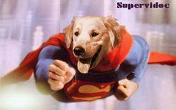 Bandit Wang, chien Manchester Terrier