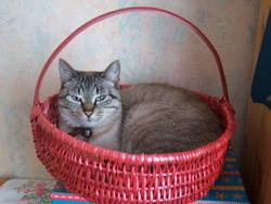 Thalès, chat