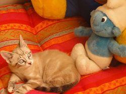 Gulli, chat