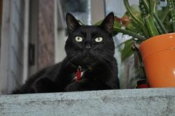 Julesbouchon, chat Gouttière