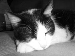 Judas, chat Gouttière