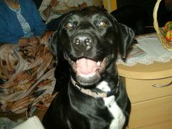 Shannel, chien
