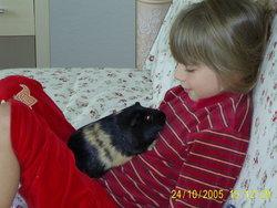 Pipouille, rongeur Cochon d'Inde