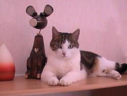 Piwie, chat Gouttière