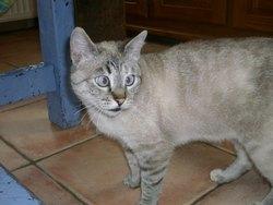 Pichenette, chat Gouttière