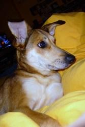 Rosy, chien