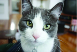 Henri, chat