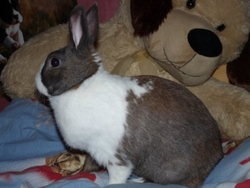 Toony, rongeur Lapin