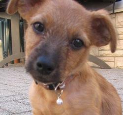 Chico, chien