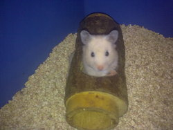 Nokia, rongeur Hamster