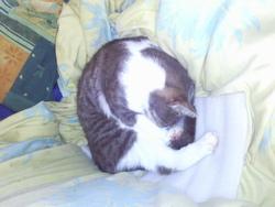 Ponpon, chat Gouttière
