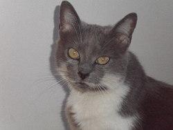 Biboune, chat Gouttière