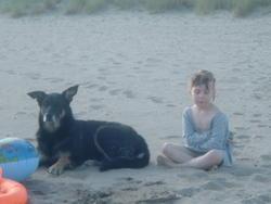 Tajine, chien Beauceron
