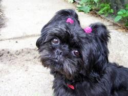 Marie Pichenotte, chien