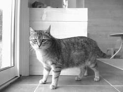 Mousse, chat