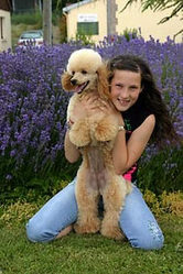 Kapi, chien Caniche