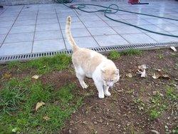 Moustique, chat