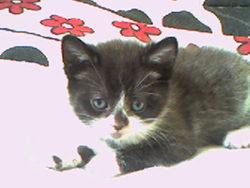 Sami, chat Gouttière