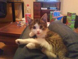 Manson, chat Gouttière