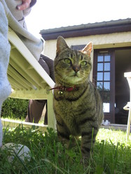 Kana, chat Gouttière