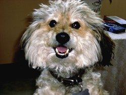 Micky, chien